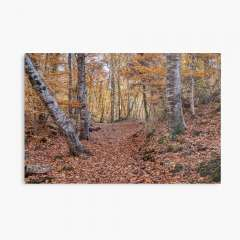 Neverending Autumn in la Fageda d'en Jordà - Metal Print